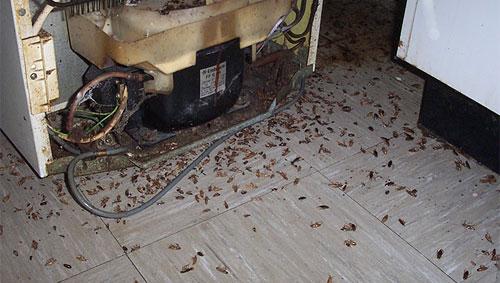 Тараканы - тоже форма жизни.  Где-то они есть, в других местах их нет.