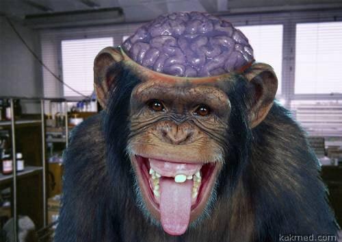 Обезьяний мозг - почти человеческий