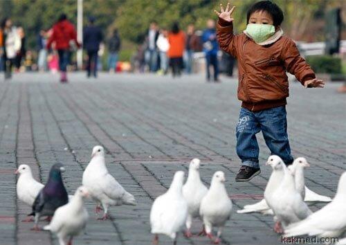 Страшный птичий грипп добрался до Пекина