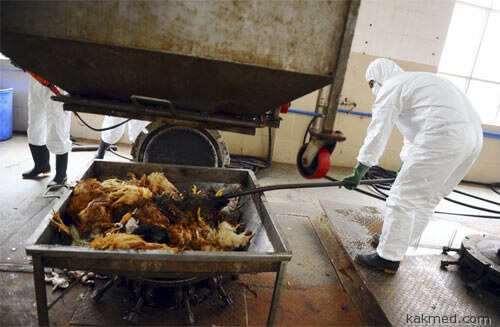 Массовый забой кур в Китае