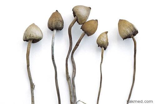 Галлюциногенные грибы и депрессия