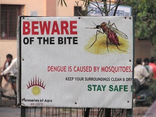 Как побороть лихорадку денге