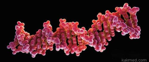 Анализ зародышевой ДНК