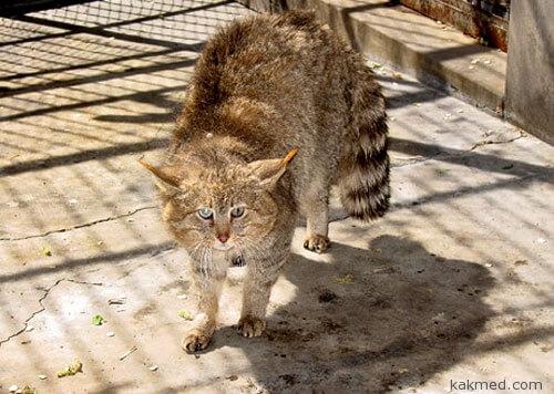 Стерилизация китайских котиков