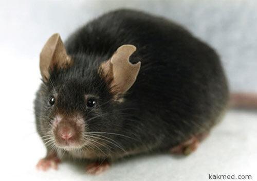 Мышка клон