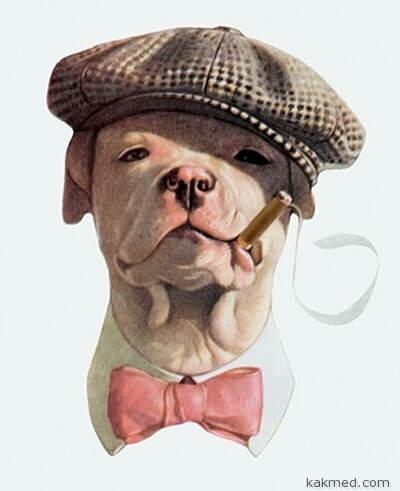Курение убивает вашу собаку