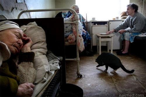 А у нас - настоящие животные помогают старикам не сойти с ума от одиночества