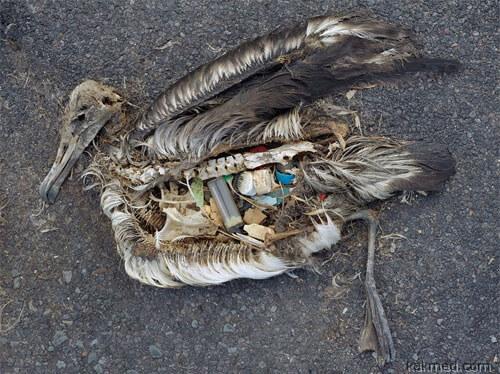 Жертва пластмассы