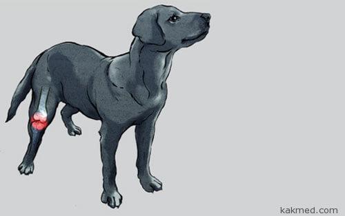 Новый препарат для обезболивания собак