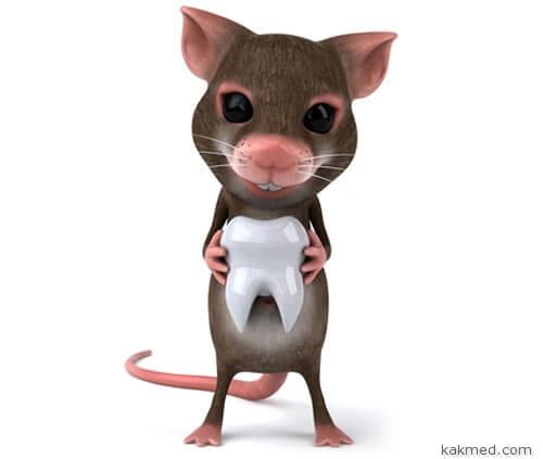 В организме мыши вырастили человеческий зуб