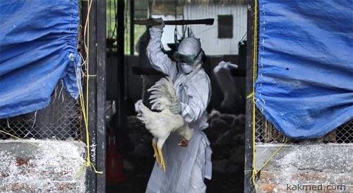 В КНР режут кур