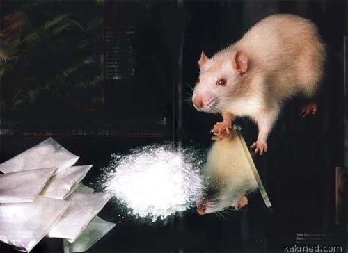 СПИД, мыши, кокаин