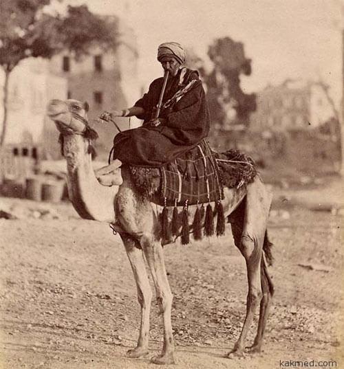 Верблюд - зараза