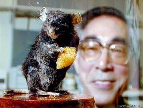 Профессор Янагимачи