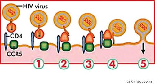 Как обмануть ВИЧ