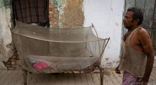 Эпидемия денге в Индии