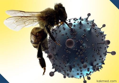 Пчелиный яд против СПИДа