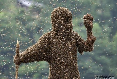 Нам не страшен пчелиный рой