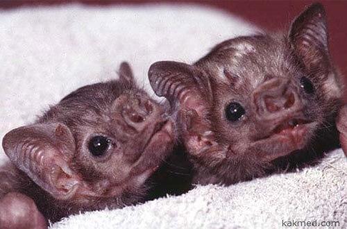 Бойтесь летучих мышей