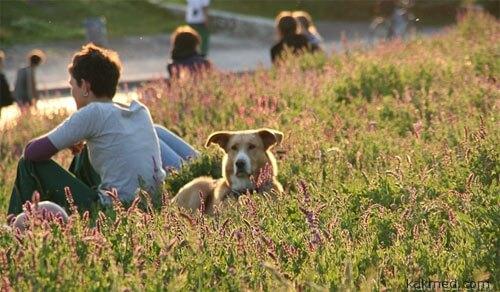 С собакой в парке