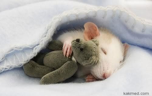 Зачем мыши спят?