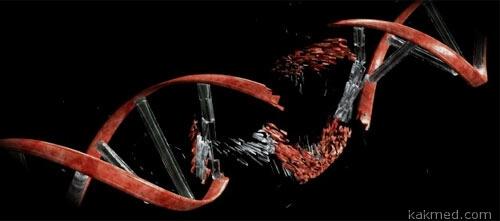 Обломки ДНК