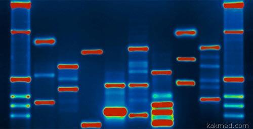 Гены человека в банке ДНК