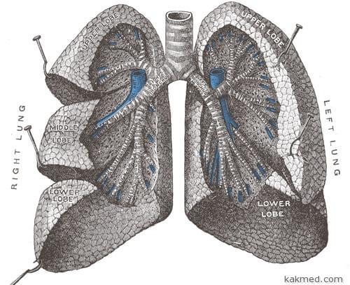 Создадим искусственное лёгкое