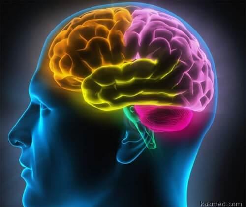 Религиозный мозг