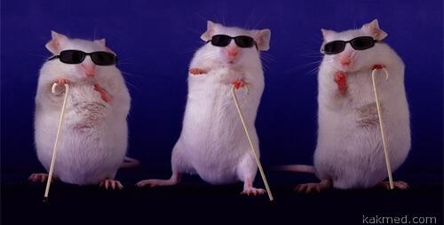 Прозрение крыс