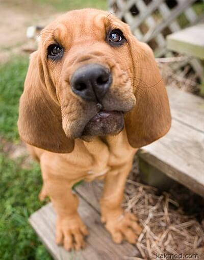 Собака-Муза