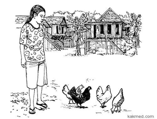 Птичий грипп и его шансы на победу