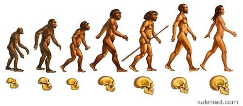 Эволюция человека и его черепа