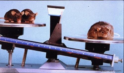 Мышь на неправильной диете