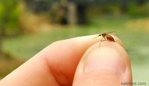 Комары разносчики вируса