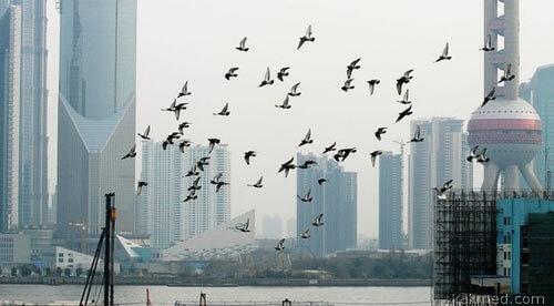 Над Китаем трепещет крыльями смерть