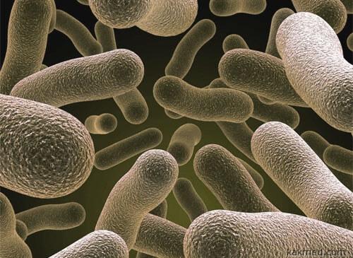 Полезная желудочная микрофлора