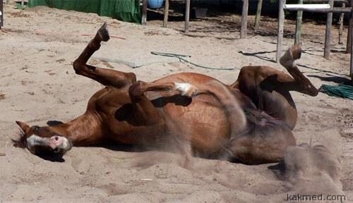 Почему кони валяются