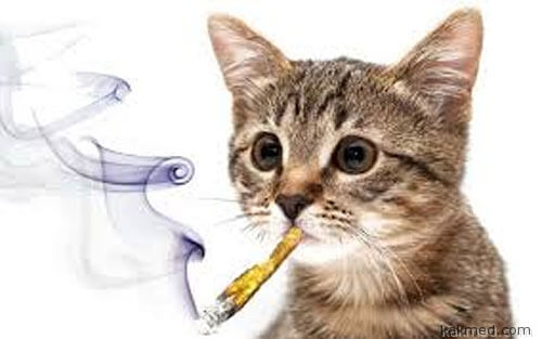 Наркотиков для котиков