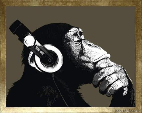 Музыка и шимпанзе