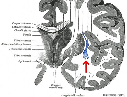 http://kakmed.com/img/2014/07/03-brain-on-off.jpg