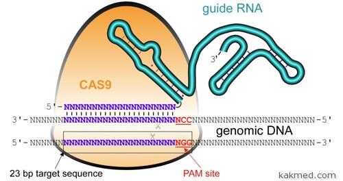 Комплект для ремонта ДНК