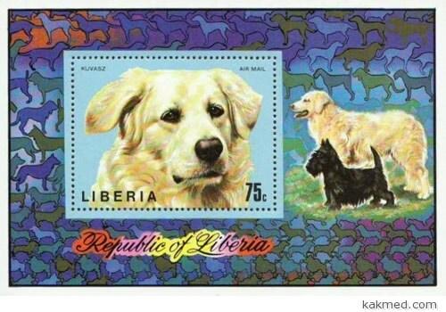 Либерийские собаки-трупоеды