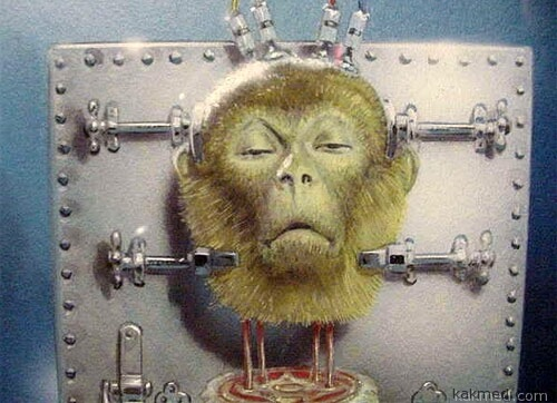 Беда с обезьянами