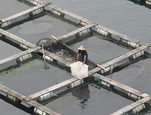 Рыбья ферма