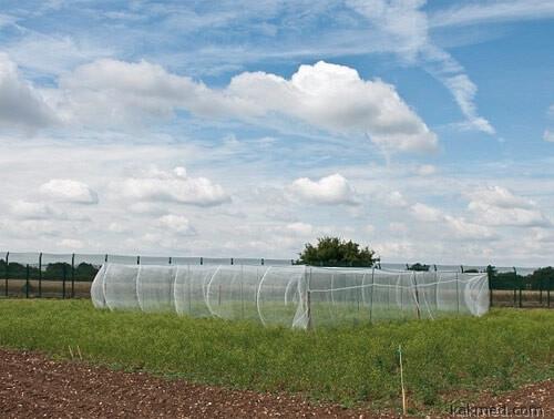 Урожай ГМО в Англии