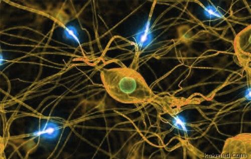 Новые синапсы