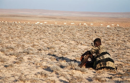 Снова неурожай в Сомали