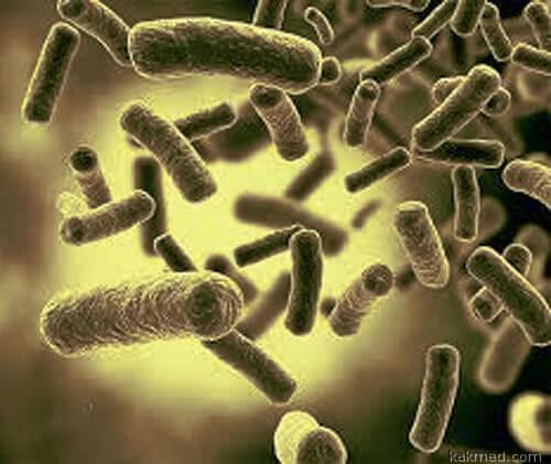 Война бактерий