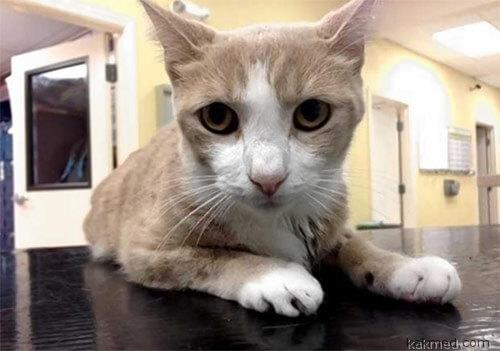 Необычный пациент кот